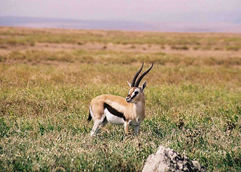 Plains-Game-Hunting-Africa-Tanzania-Thom