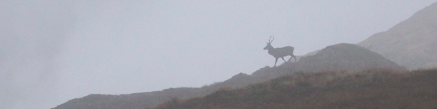 Red-Deer-Stalking-Scotland-Highland-Stag