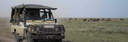 Safari transport vehicle on savanna Masailand plains of Tanzania, with distant wildebeest herds.