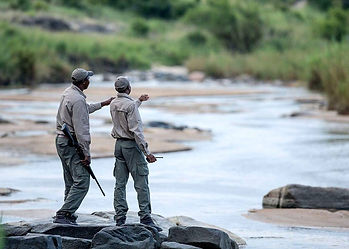 Local safari camp guides discuss a river crossing to a sustainable use hunting conservation management area in Tanzania.