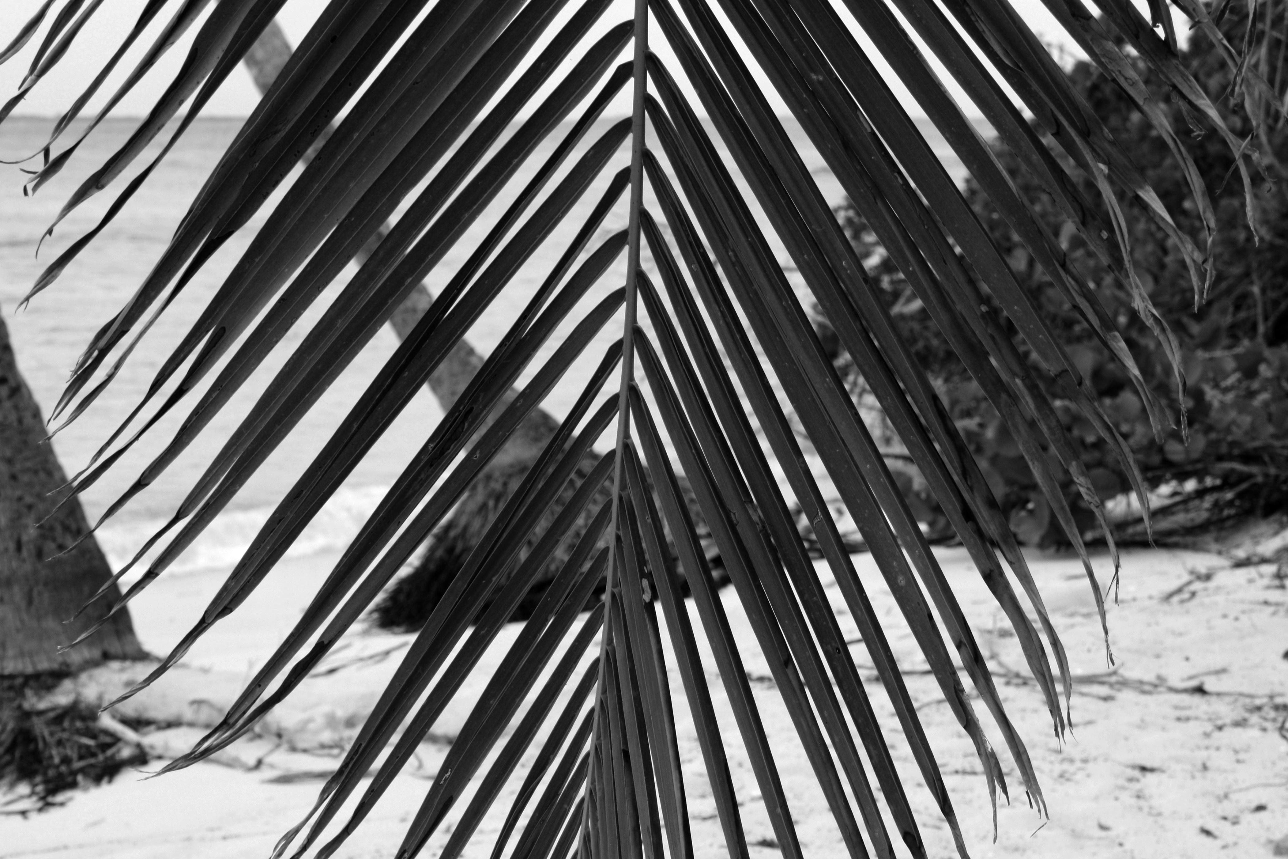 Derrière les palmiers (50€)