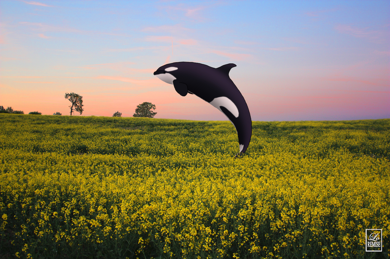 Orque au champs - Normandie - Available in shop