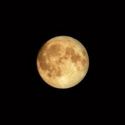 Portrait de Lune (60€)