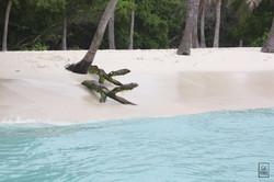 Crocodile des tropiques - Morrocoy, Venezuela