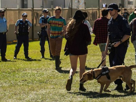 MUSIC FESTIVAL DEATHS INQUEST HEARS PRESENCE OF POLICE DOGS LED TO PANICKED DRUG-TAKING