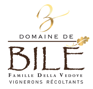 domainedebile.png
