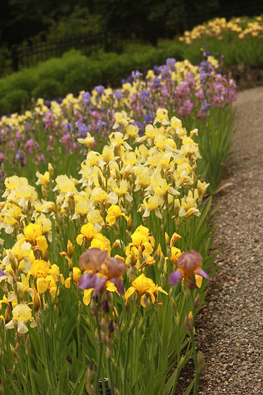 view of iris collection