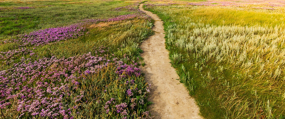 Field of wildflowers with a windy dirt path down the center