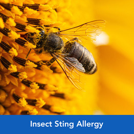 insect_sting_allergy.jpg