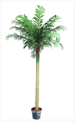Palm Tree Hire