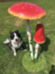 Mushroom_ Toadstool Prop Hire