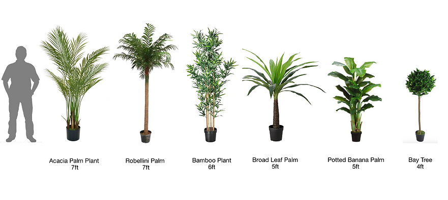Artificial Tropical Plants for Hire Even