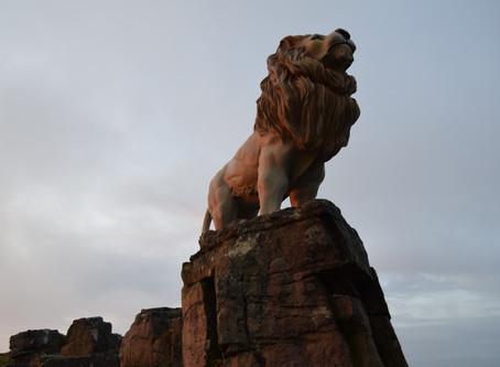 Mountain Lion on Sugarloaf Mountain Abergavenny!