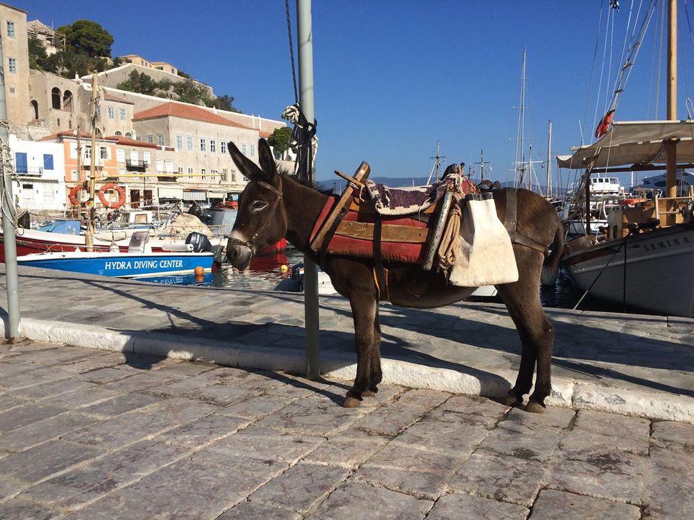 Hydra island donkey transportation