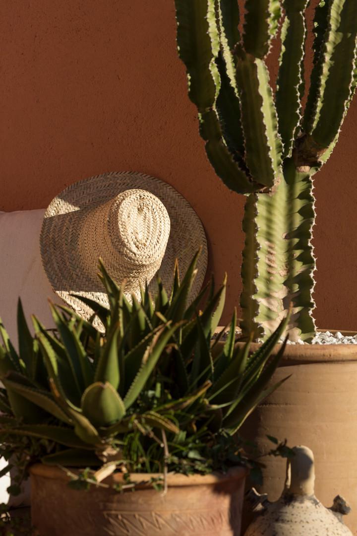 cactus et chapeau