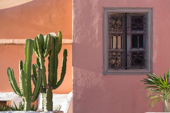 cactus et fenêtre