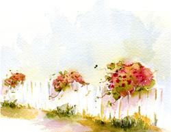 Mamie's Roses