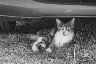 Katze-03024.jpg