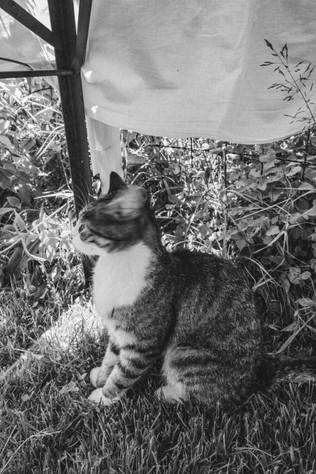 Katze-03045.jpg