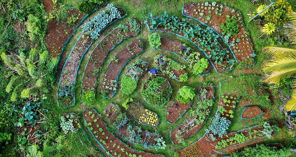 Photo aérienne d'un jardin potager permacole diversifié au Costa Rica