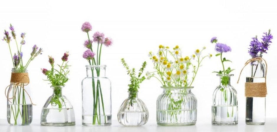 banniere-medicinal-plants.jpg