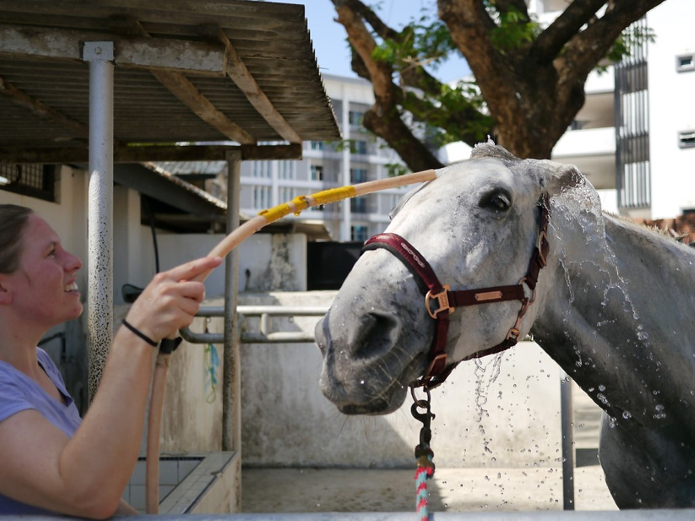Horse bath Penang