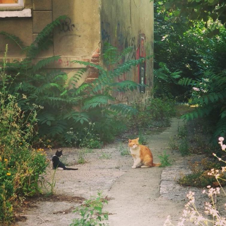 Street cats Sofia Bulgaria