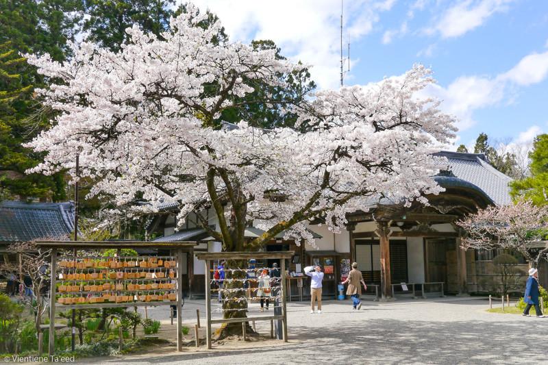 Hiraizumi Temple Japan