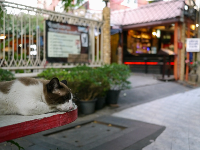 Sleeping cat is bored by the surrounding backpackers on Khao San Road, Bangkok