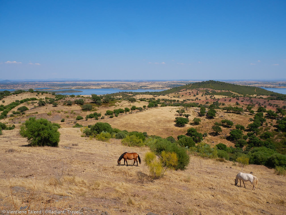 Horses grazing Monsaraz, Alequva