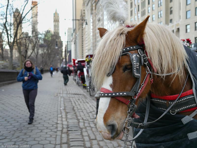 Central Perk Pony