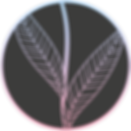 MA Logo - 450px.png