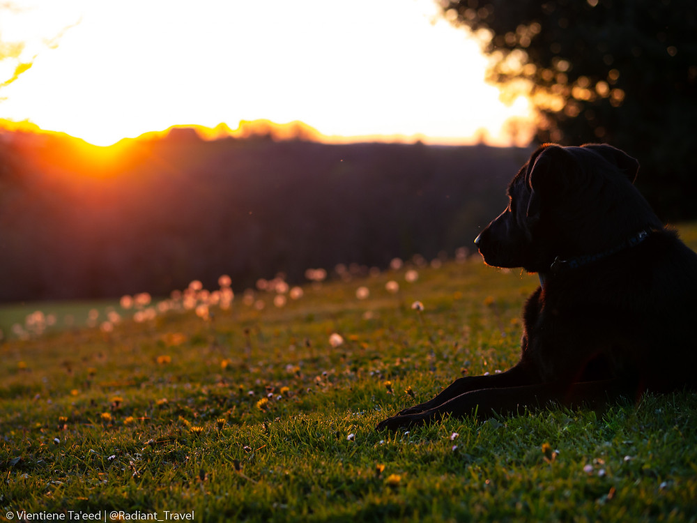 Dog in Sunset