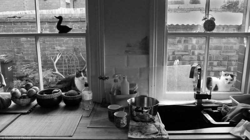 Cold kitties make the kitchen seem warmer...