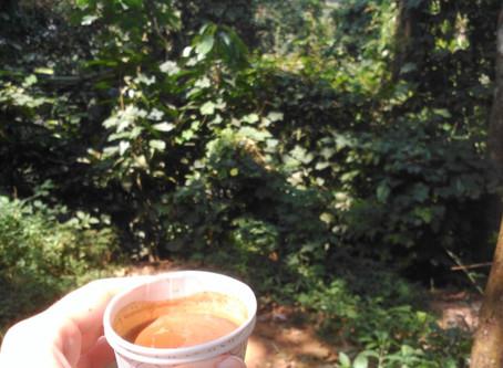 Teas of the World: Pt 6 India (Living Kerala Series)