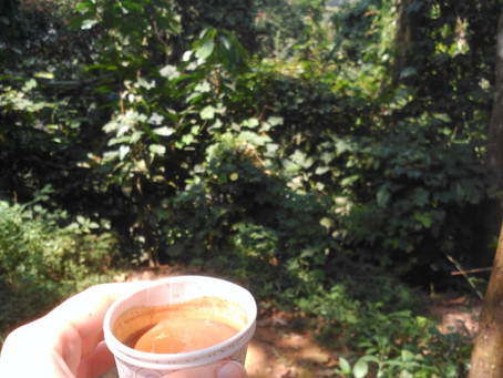 Teas of the World: Pt 6 India (Living Kerala Series)