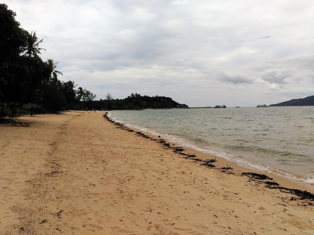 Mango debris on Koh Phayam