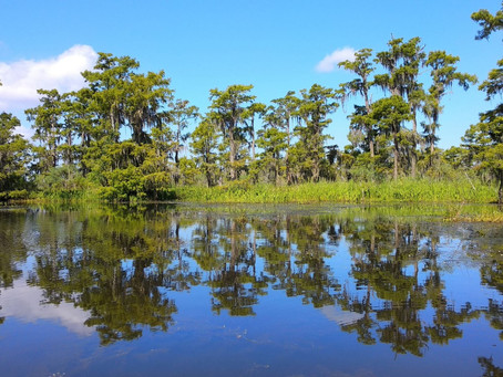 A Beautiful Morning on the Bayou