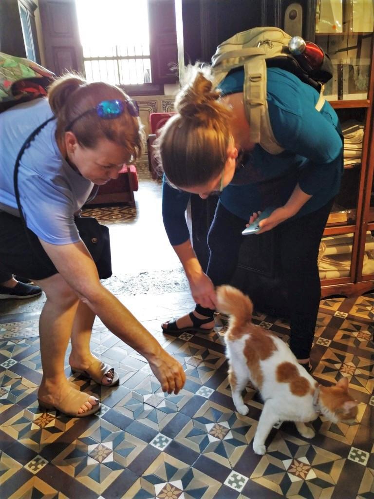 Cat Penang Blue Mansion