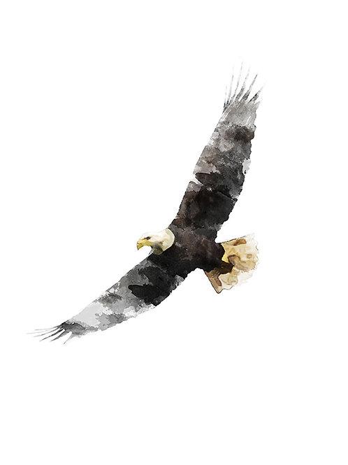 WATERCOLOUR EAGLE