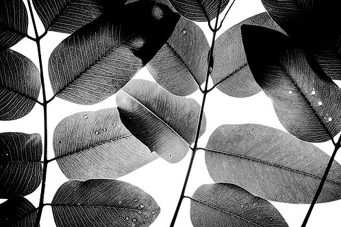 EXPERIMENT WITH LEAVES II