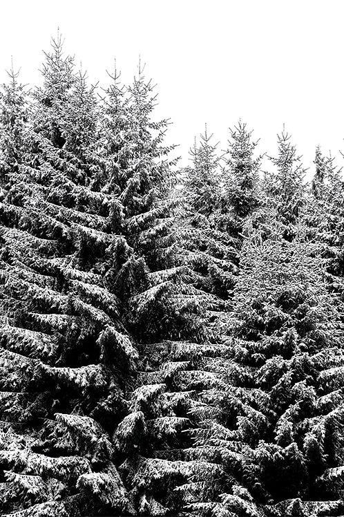 SNOWY CHRISTMAS TREES