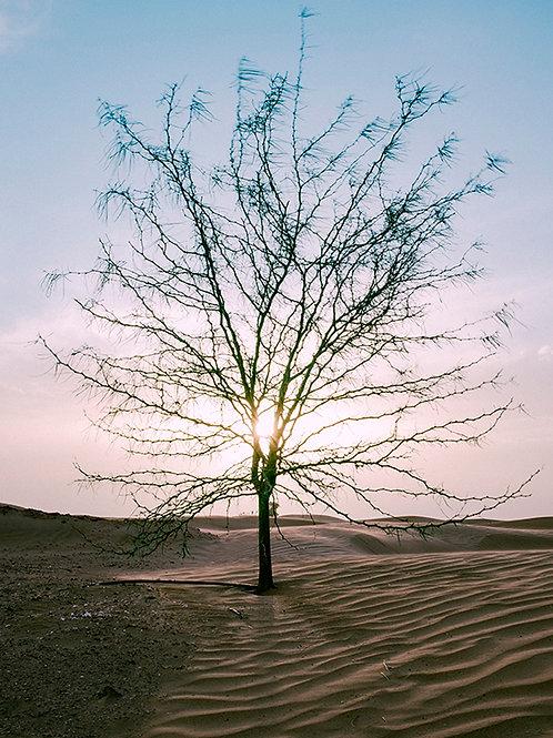 DRY TREE SUNSET