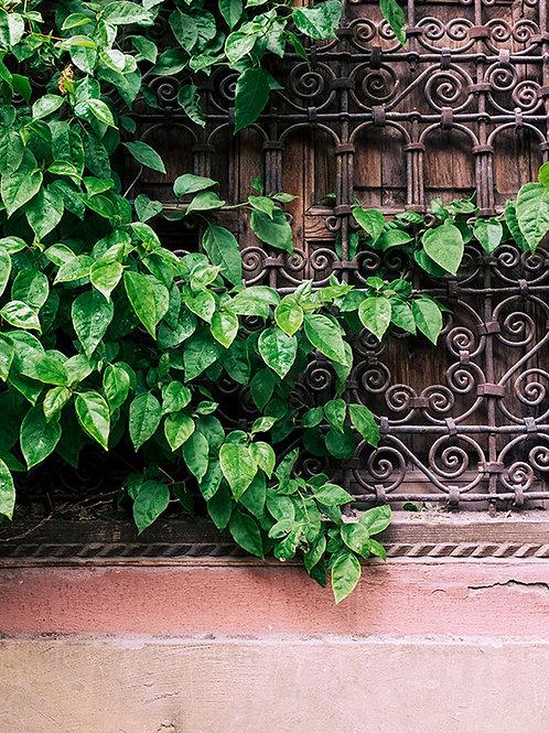 MARRAKECH PLANTS