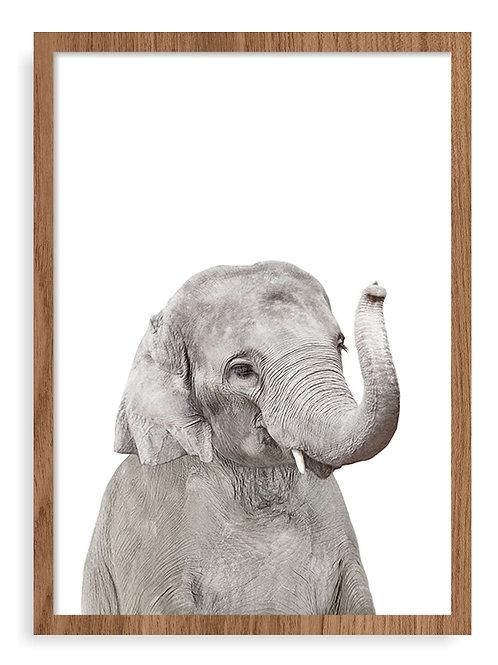 ELEPHANT - A3 - Freijó