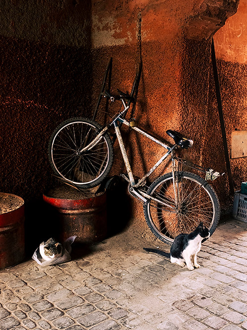 MOROCCAN CATS