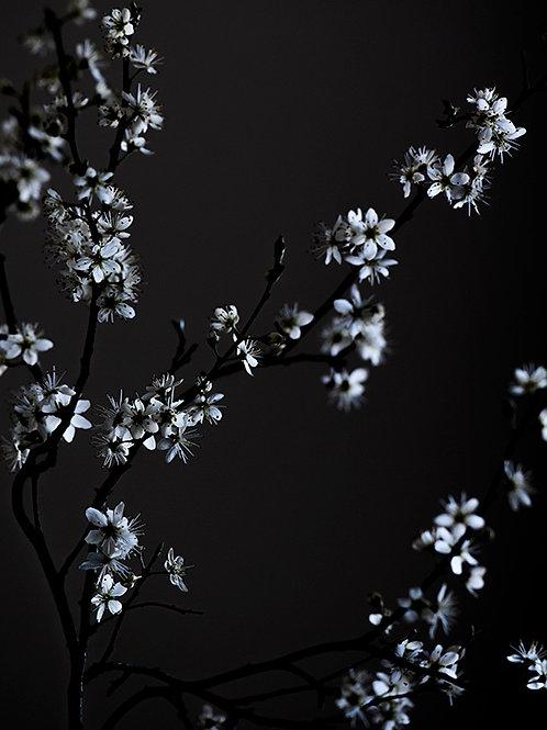 MOODY FLOWER BEAUTY