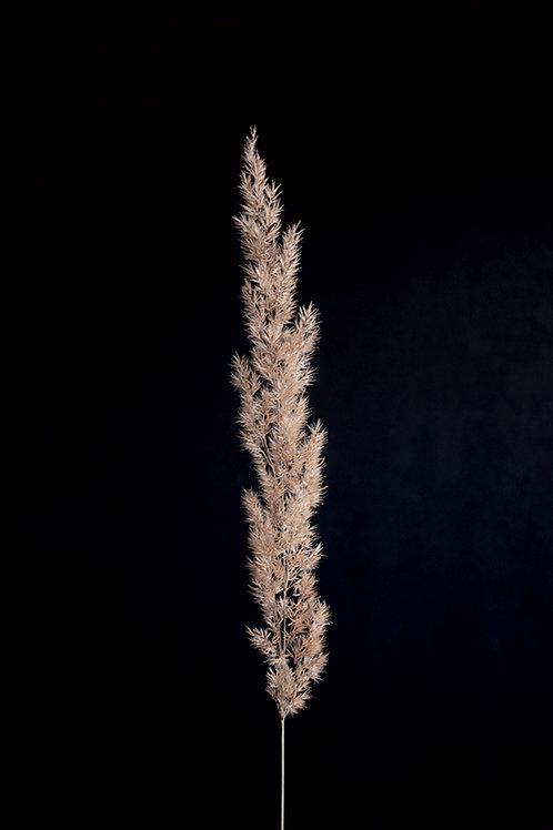 MINIMAL PAMPAS GRASS ON BLACK