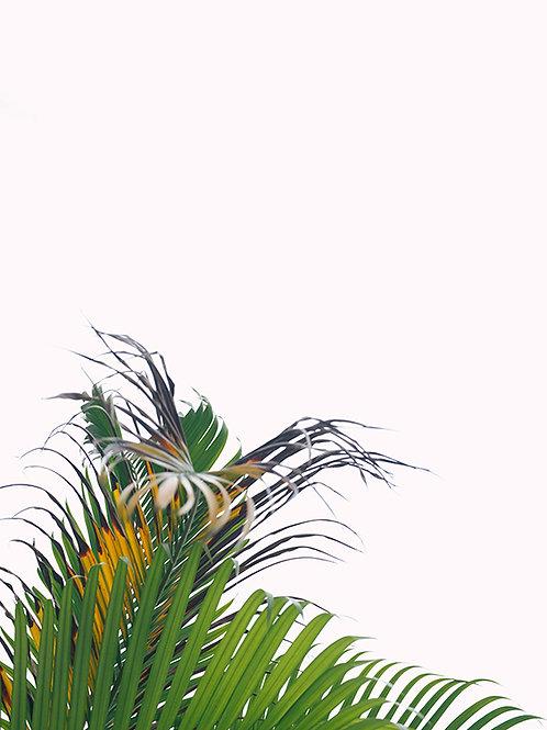 WHITE SKY AND PALM TREE #2