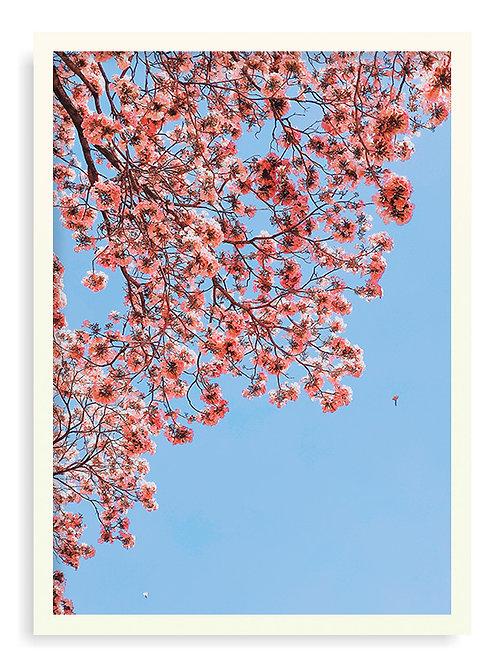 NATURE (10) - A5 - Branca